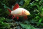 Venta de peces  escamosos