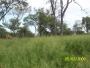 Venta campos y estancias en paraguay desde u$s 60/ha