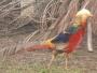 Vendo aves ornamentales y animales de corral