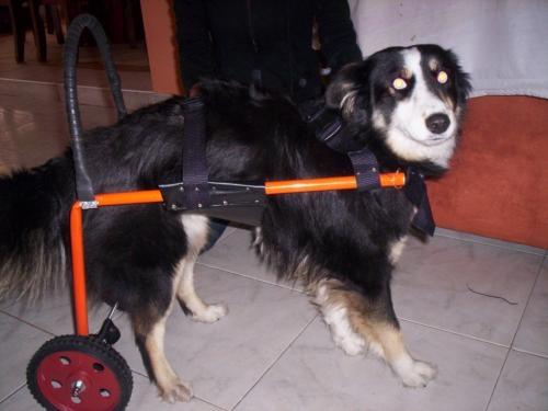 Salvar a los animales porque son nuestros amigos taringa for Sillas para perros