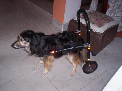 Fotos de sillas de ruedas para perros cundinamarca for Sillas para perros