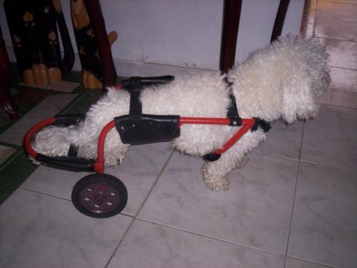 El 05 08 2010 nunca lo olvidare mediavida for Sillas para perros