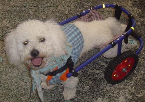 Pin vendo beagle bebes comprar lisboa on pinterest for Sillas para perros