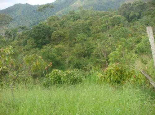 Fotos de Parcela terreno llano de palmas rionegro santander 1