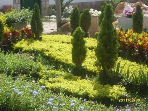 Plantas ornamentales tattoo design bild for 20 plantas ornamentales