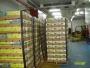 Traspaso empresa  española de importación exportación de frutas dada de alta  en Madrid (España) lista  para  exportar  y importar sin ningun tipo de  deuda.