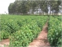 Se Requiere Socio con Terreno para Proyecto Agro-Industrial