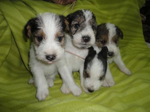 El Rottweiler | Perros.com