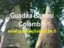 VENTA DE GUADUA BAMBU COLOMBIA, INMUNIZADA Y AVINAGRADA