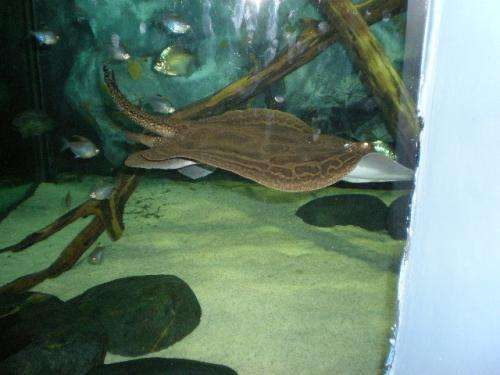Pin venta de peces betta regalo bettas machos y hembras for Peces ornamentales acuarios