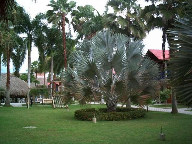 de Cabaña tolu coveñas condominio palmacaoba en Sucre, Colombia