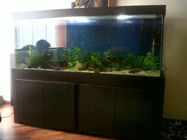 Fabricacin de acuarios acuaglass diseo exclusivo en Bogot