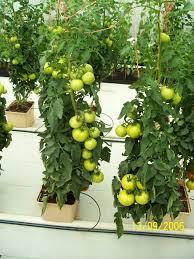 Cultivos hidroponicos -taller teorico practico