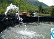 venta de peces en colombia