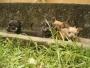 Hermosos Chihuahuas, lo mas pequeños!