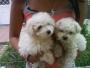 Cachorros alegres venta de cachorros