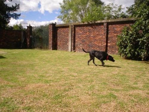 Guarderia canina campestre en bogota