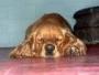 club colombiano de mascotas