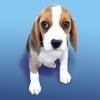 ***vendo 3 lindas cachorritas beagle tricolor $300.000,oo***