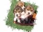 venta de hermosos cachorros beagles de 2 meses