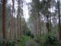 asesorias, capacitaciones  forestales eje cafetero
