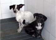 Adoptemos perritos y gatitos, salvémoslos de morir sin razon