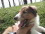 pet shop vende cachorros de todas las razas y gaticos persas