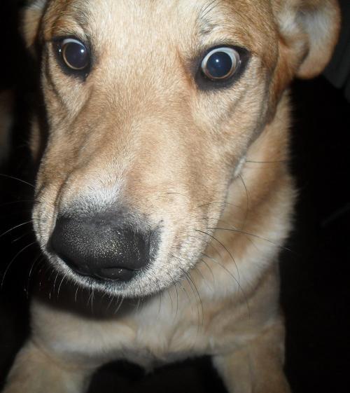 Fotos de Regalo perro 1