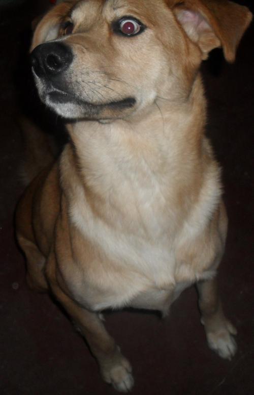 Fotos de Regalo perro 3