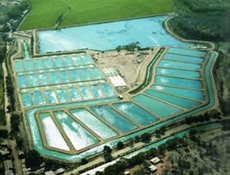 Fotos de Asesoria asesoria cria cultivo peces peces  2