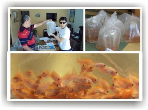 Fotos de Asesoria asesoria cria cultivo peces peces  4