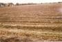 VENDO LOTE AGRICOLA ESPINAL TOLIMA