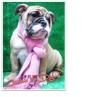 Bulldog Ingles Hermosa Cachorra  Registro Accc Fiona