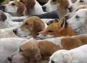 Investigador privado fox