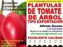 PLÁNTULAS DE TOMATE DE ÁRBOL SEMILLA y PLANTAS EN VIVERO para EXPORTACIÓN