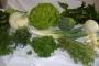 Organicos del campo, venta de productos organicos a domicilio