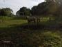 vendo granja 3 hectareas