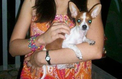 Fotos de Chihuahua para monta en bogotá 2