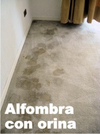 4244386lavado de alfombras y muebles