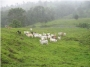 De oportunidad! Hacienda ganadera de 915 hectáreas a $1?700 000,oo  en Santo Domingo de los Tsáchilas