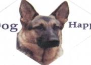 ENTRENADOR CANINO DOG HAPPY