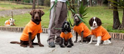 Adiestramiento canino y correcion de conductas