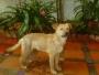 hermoso y cariñoso perrito en adopcion