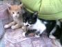 Adopcion de gatos