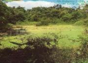 Vendo Hermosa Finca en Manabi - Ecuador, para proyectos de agroturismos