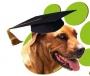 Adiestramiento  canino personalizado.