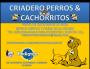 PERROS & CACHORRITOS