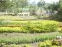 vivero  de plantas ornamentales en chinauta