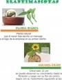 plantas enanas