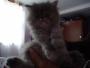 Se vende ultima gata persa